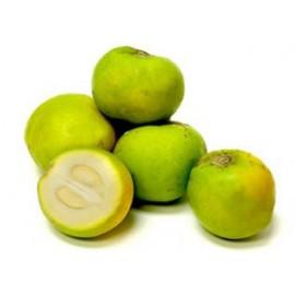 نهال ساپوت سفید یا خرمالو سبز