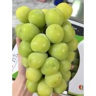 نهال انگور شاین موسکات ژاپنی نایاب