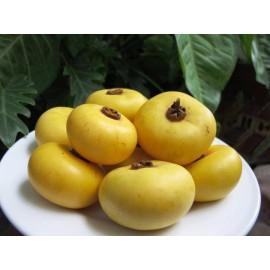 نهال سیب کِی یا خرمالو افریقایی