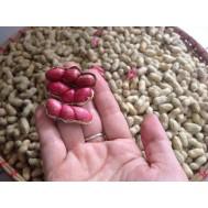 بذر بادام زمینی قرمز نایاب